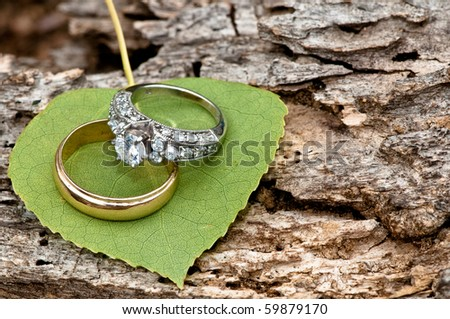Rings on Aspen leaf at Estes Park, CO - stock photo