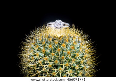 Rings on beautiful fresh green cactus, love concept - stock photo