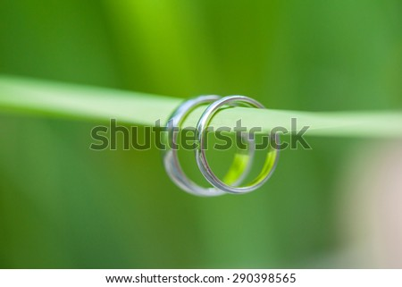 Rings  wedding on a green  leaf background  - stock photo