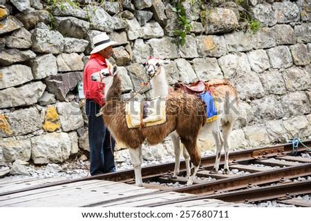 RIOBAMBA, ECUADOR - JAN 7, 2015: Unidentified Ecuadorian man with two lamas near a rail road. 71,9% of Ecuadorian people belong to the Mestizo ethnic group - stock photo