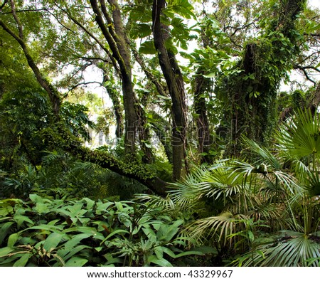 Riot of vines, leaves and branches in a tropical garden - stock photo