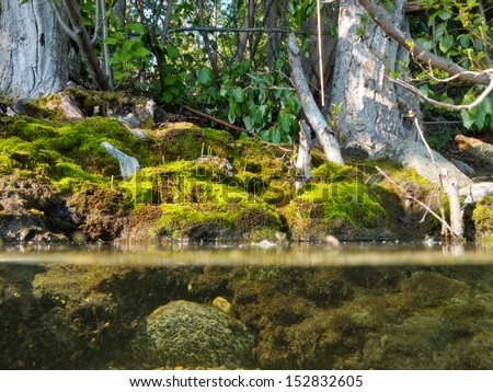 Riparian habitat ecosystem of forest lake shore with tree roots moss and aquatic plants in a over under split underwater view - stock photo