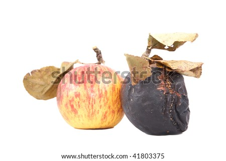 Ripe and rotten apples with dry leaves on a white background - stock photo