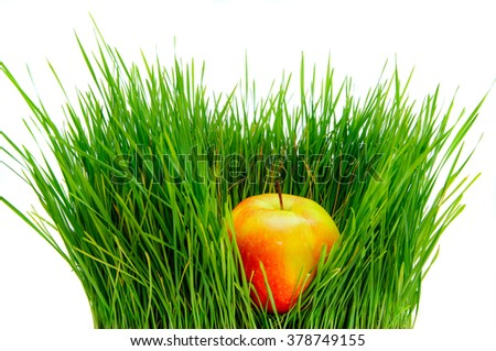 Ripe apple lies in a high green grass on a white background. Fresh food product of a healthy lifestyle. Fruit diet. - stock photo