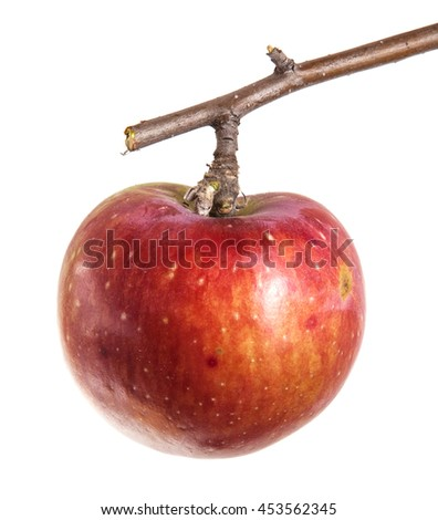 ripe apple on the branch isolated on white background