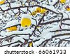 ripe apples are hanging on a branch covered with first snow - stock photo