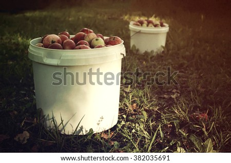 Ripe apples. Vintage toned image. - stock photo