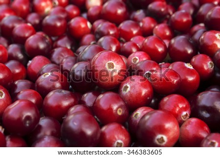 Ripe autumn cranberries harvest. Ripe juicy cranberries, bright autumn colorful background - stock photo