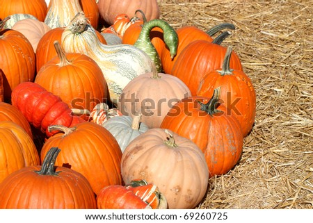 Ripe autumn pumpkins on the farm - stock photo