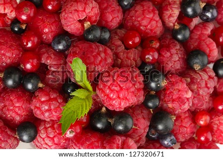 ripe berries with mint, close up - stock photo