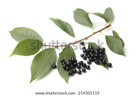 Ripe bird cherry with green leaves on white background - stock photo