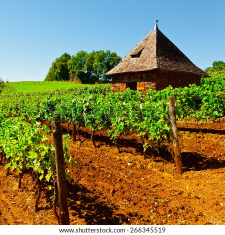 Ripe Black Grapes in the Autumn in France - stock photo