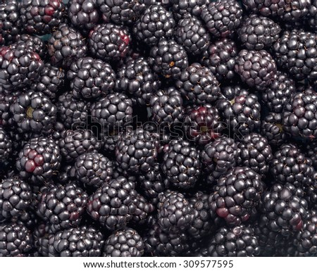 Ripe blackberries background closeup shot - stock photo