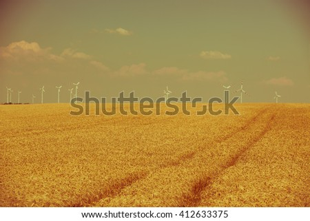 Ripe Cereal field. Filtered Shot with a selective focus - stock photo