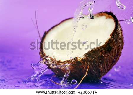 ripe coconut and water splashes on violet - stock photo