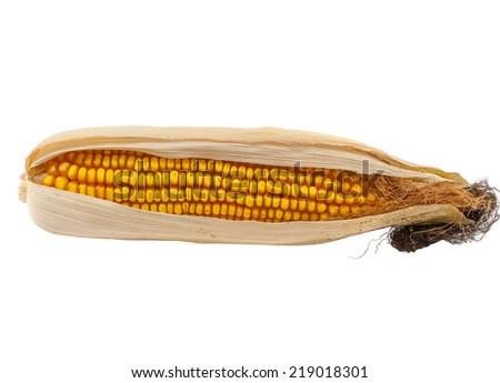 Ripe corn cob isolated on white background - stock photo