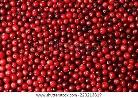 Ripe cranberries for background  - stock photo