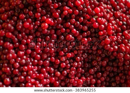 Ripe cranberries for background berry - stock photo