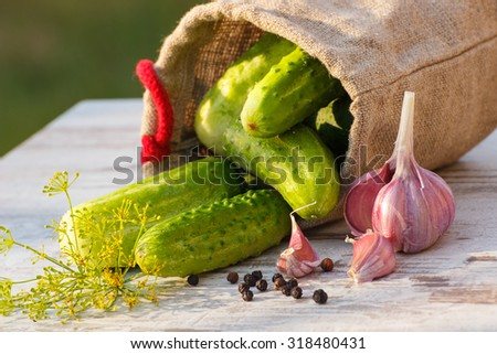 Ripe cucumbers in jute bag and spices for pickling cucumbers on old white wooden table in garden on sunny day - stock photo