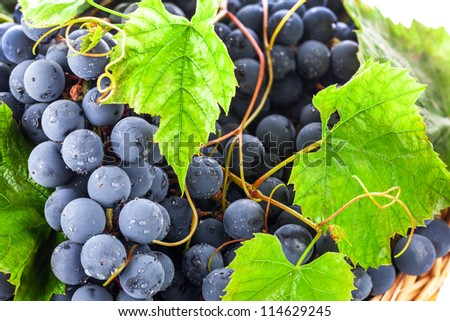 Ripe dark grapes with leaves, background - stock photo