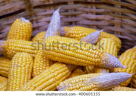 Ripe dried corn cobs,corn seeds make it dry. - stock photo