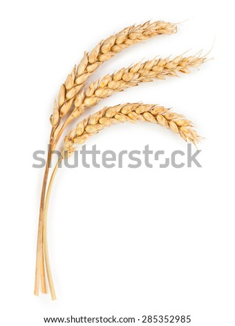Ripe ears of wheat isolated on white background - stock photo