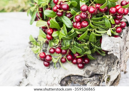 Ripe fresh berries on the branches of cranberries on the background of an old tree bark in the northern forest. selective Focus - stock photo