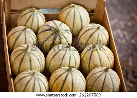 Ripe fresh melons box on a farmers market. Horizontal shot with a selective focus - stock photo