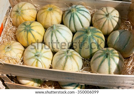 Ripe fresh melons pile in a farmers market. Horizontal shot - stock photo