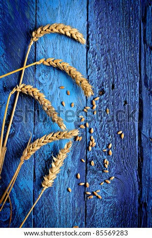 ripe golden wheat and grains - stock photo
