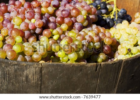 Ripe grape in bucket - stock photo