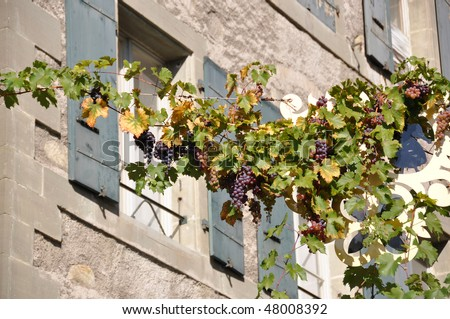 Ripe grapes against old building in Lavaux, Switzerland - stock photo