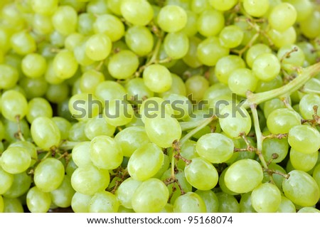 Ripe grapes. Harvest the young wine. The background of green grapes. - stock photo