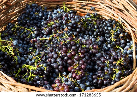 Ripe grapes in wooden basket
