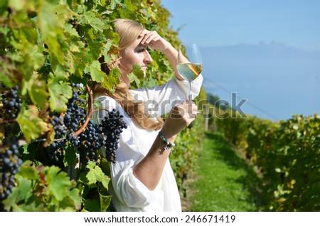Ripe grapes. Lavaux, Switzerland - stock photo