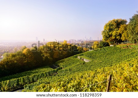 ripe grapes on vineyard and view to the city - stock photo