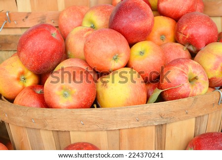 Ripe juicy apples in a wicker basket. The background is a rich harvest  - stock photo