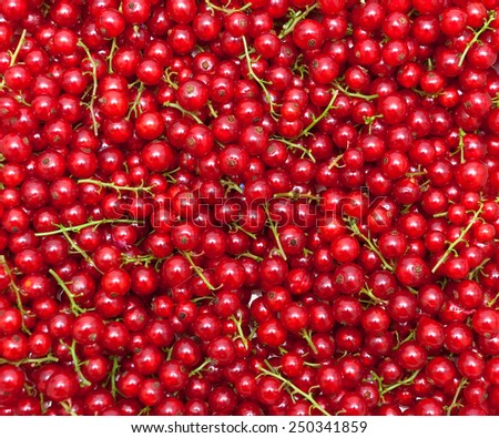 ripe juicy red currant berries. horizontal photo. - stock photo