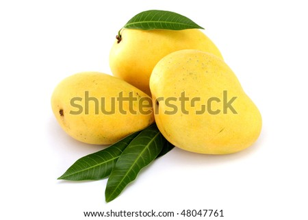 Ripe mango in the hands - stock photo