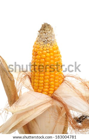 Ripe, molded corn in front of a white background - stock photo