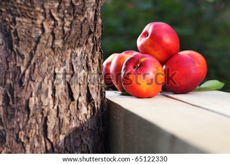 ripe nectarines near to a tree - stock photo