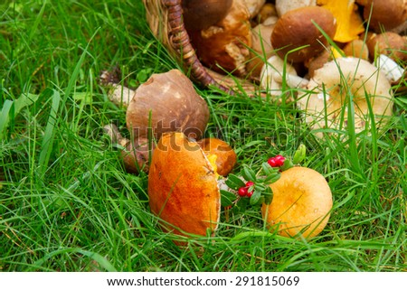 ripe of  fresh mushrooms in willow basket on bright green grass - stock photo
