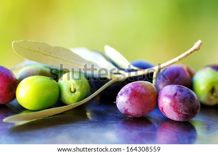 Ripe Olives, olives with olive tree branch  - stock photo