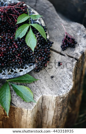 Ripe organic elder berry on branches with leaves from garden on dark rustic background, close up - stock photo
