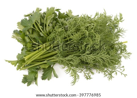 ripe parsley and dill isolated on white background - stock photo