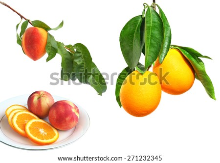 Ripe peach and orange fruits on a branch and served fruit on the plate. Isolated on white background.  - stock photo