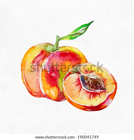 Ripe peach fruit isolated on white background. Watercolor painting. - stock photo