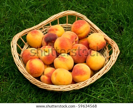 Ripe peaches in the basket on the grass - stock photo