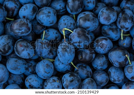 Ripe Plums Background - stock photo