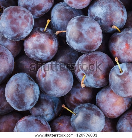 Ripe Plums (Blackthorns) Background, Texture - stock photo